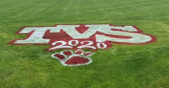 Painted 2020 Grass